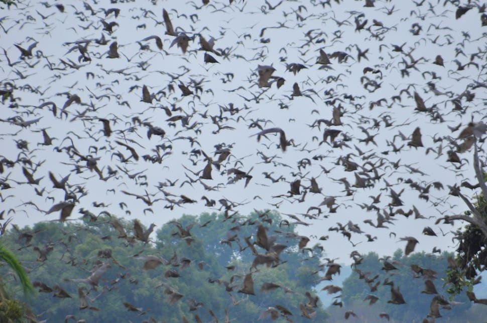 Things to do in Zambia : Bat Migration