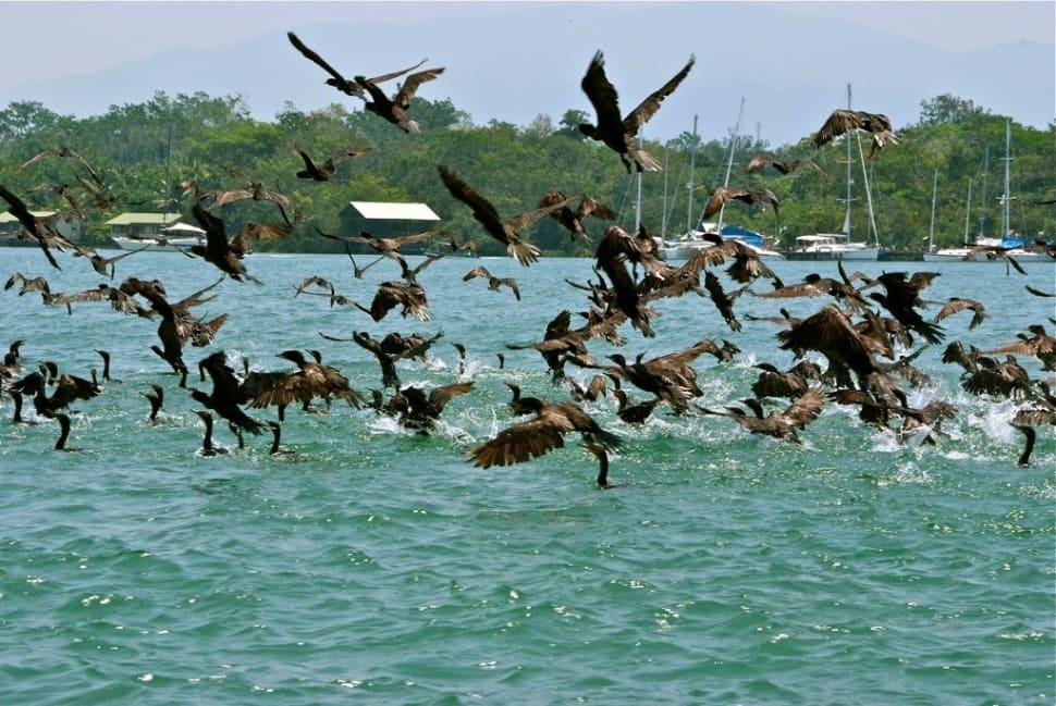 Boat Trip around Lake Izabal, Rio Dulce, and Livingston in Guatemala - Best Season