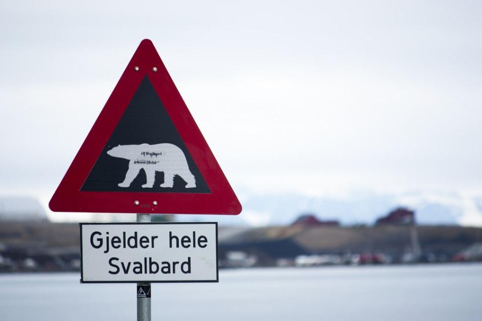 Polar Bear Watching in Svalbard - Best Season