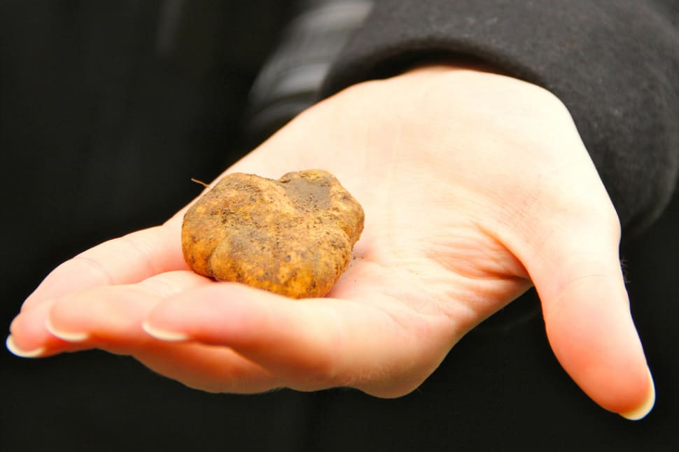 Truffle Hunting in Florence - Best Time