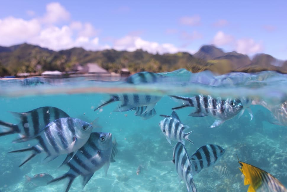 Snorkelling and Diving in Rarotonga & Cook Islands - Best Time