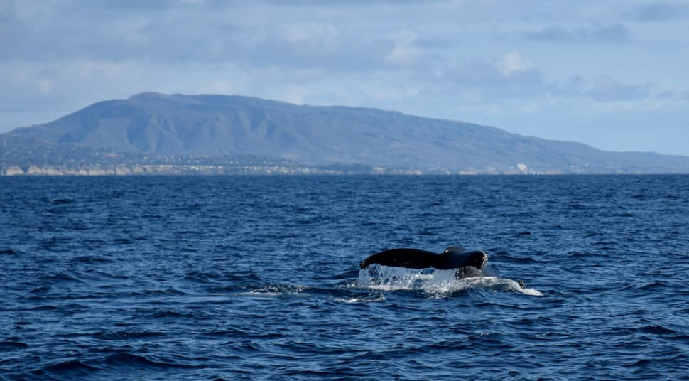 Best time for Whale and Dolphin Watching  in Los Angeles