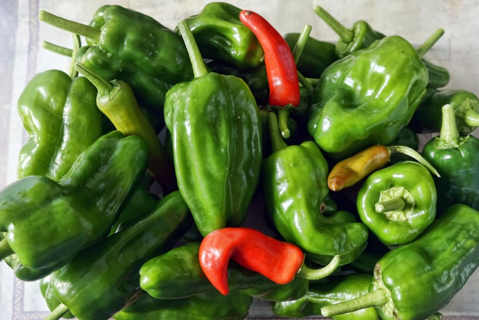 Best time to see Padrón Peppers (Pimientos de Padrón) in Spain