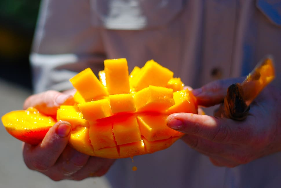 Best time to see Mango Season in Costa Rica