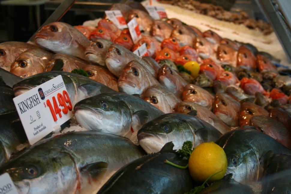 Sydney Fish Market in Sydney - Best Season