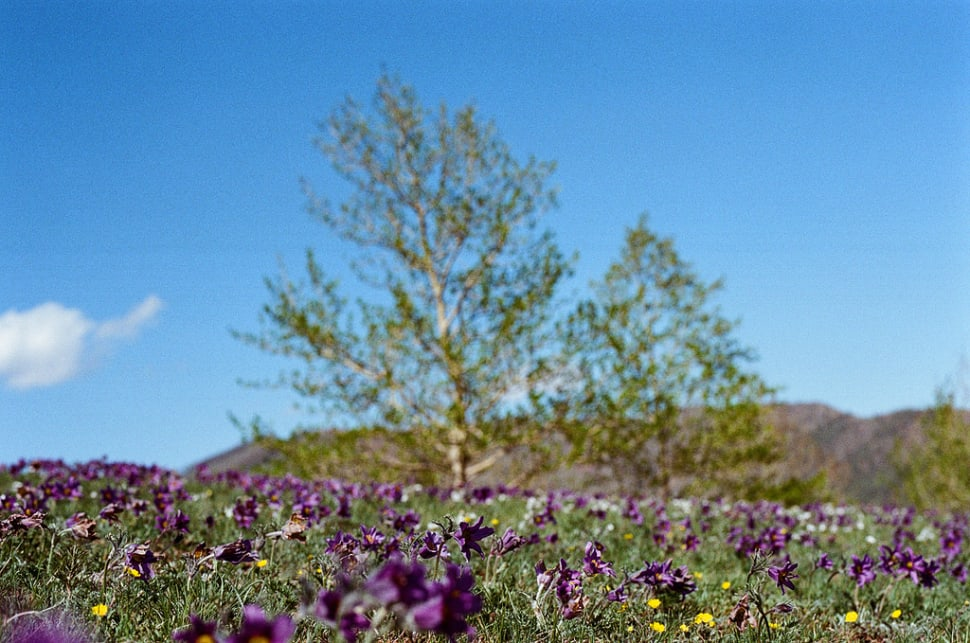 Best time for Wildflowers of Steppes in Mongolia