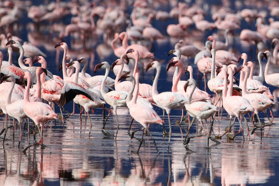 Flamingos in Tanzania - Best Time