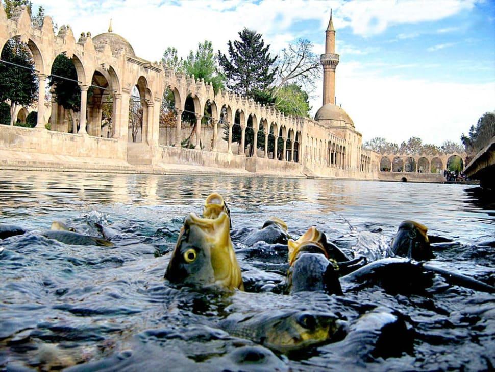 Balıklı Göl (Abraham Pool) in Turkey - Best Time