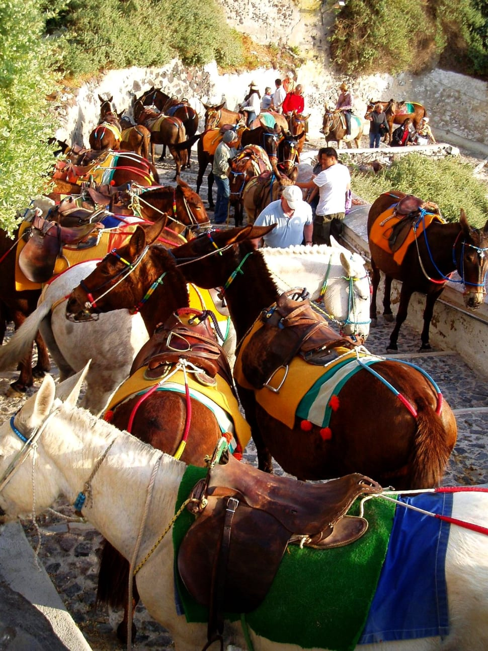 Donkey Ride in Santorini - Best Season