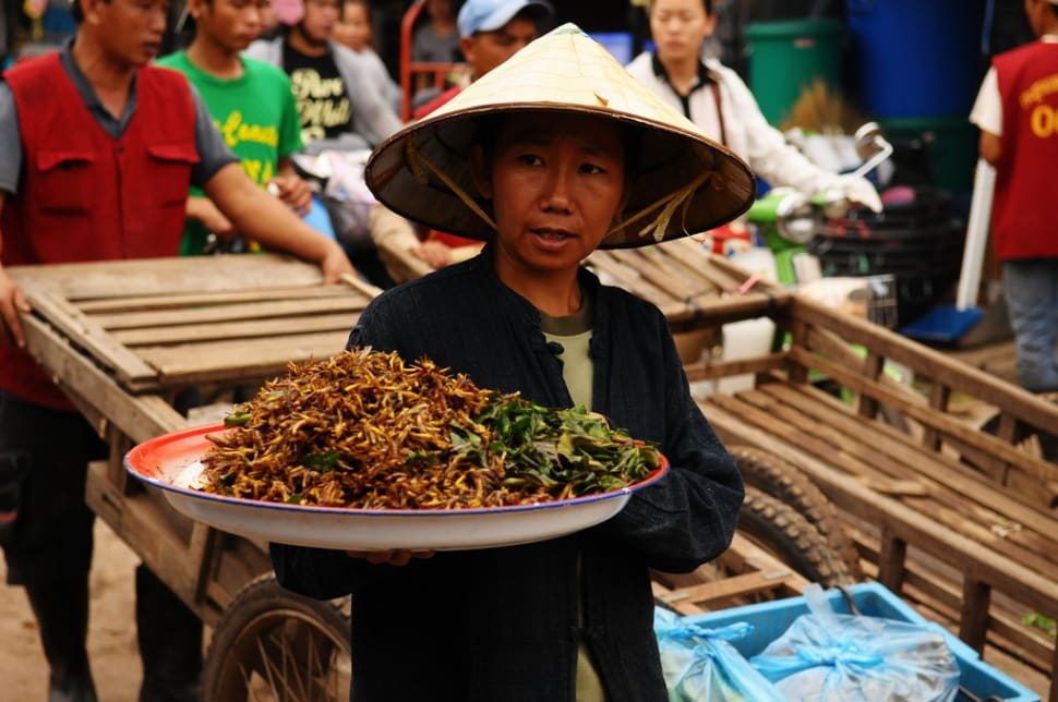 Best time for Edible Insects in Laos