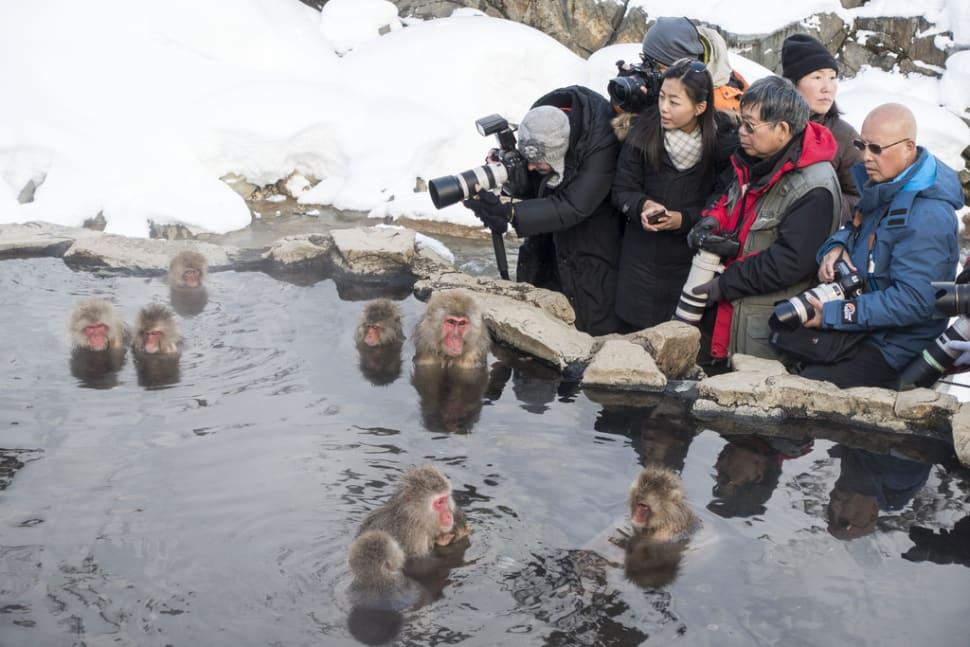 Best time for Snow Monkeys in Japan