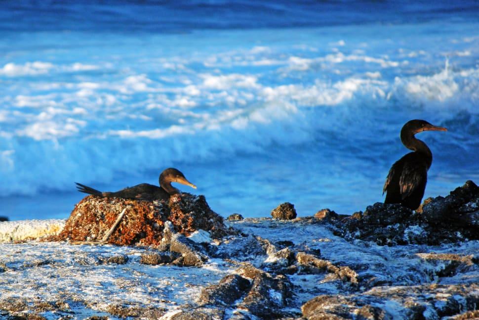 Flightless Cormorant in Galapagos Islands - Best Season