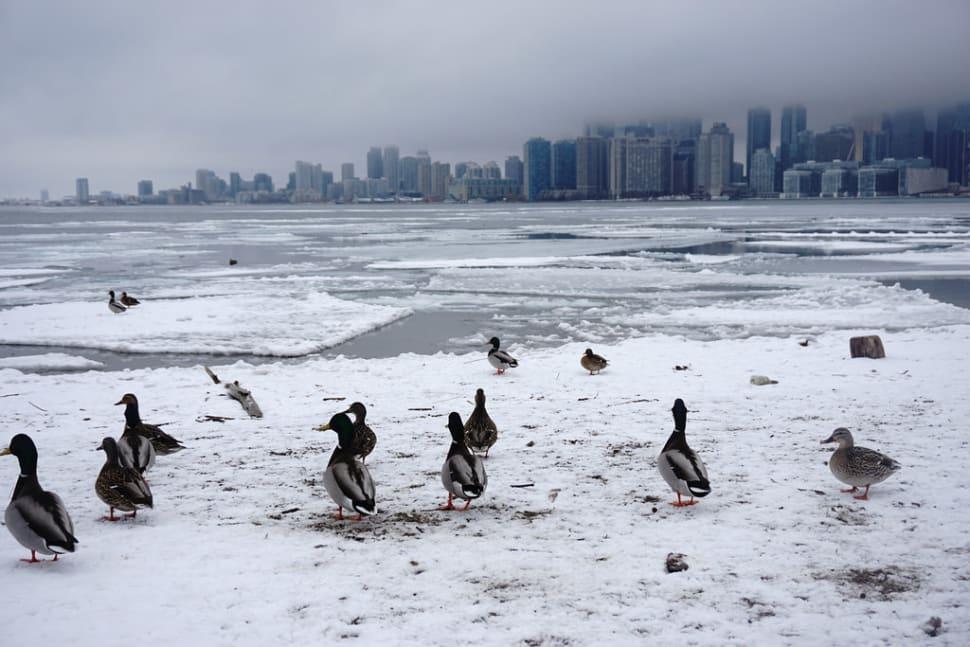 Winter in Toronto - Best Time
