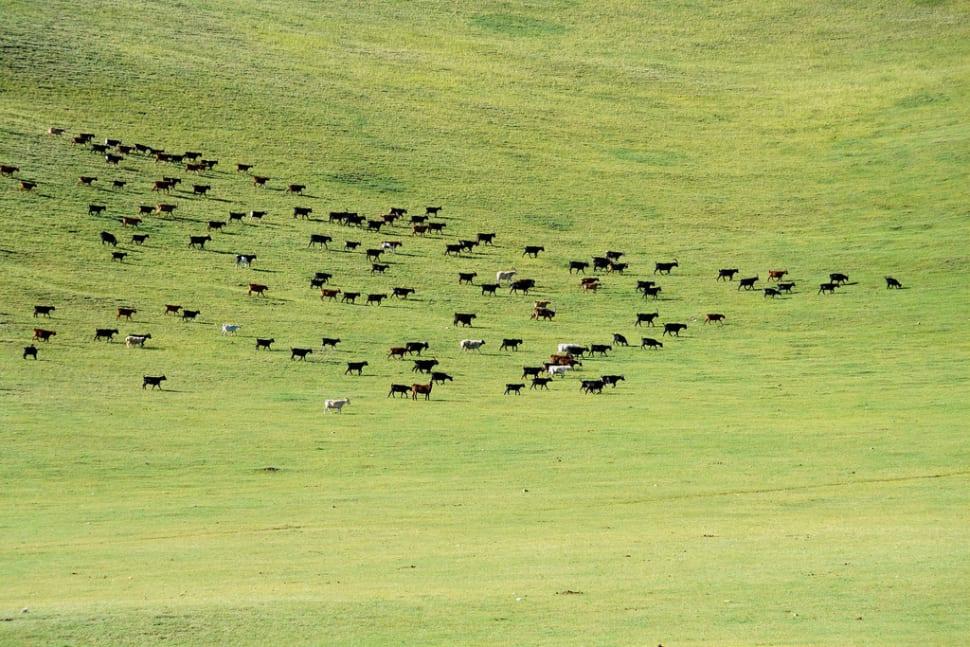 Hike in Khangai Nuruu mountains