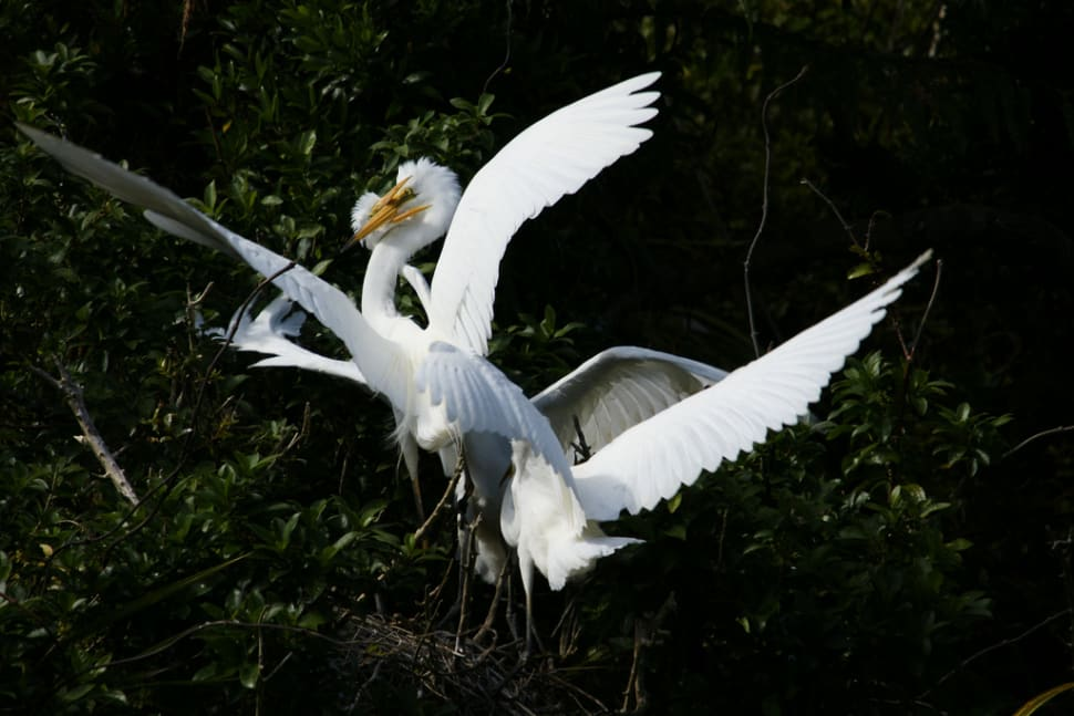 Best time for The White Heron Sanctuary Tours in New Zealand