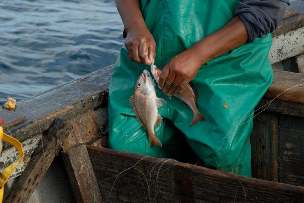 Fishing Season in South Africa - Best Season