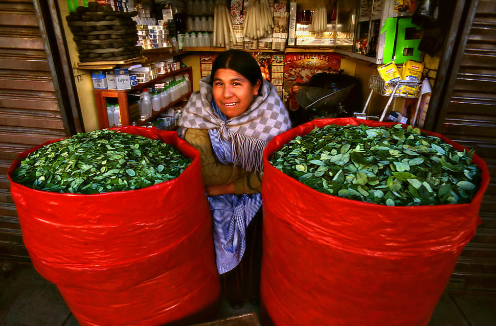 Coca Leaves Harvest in Bolivia - Best Season