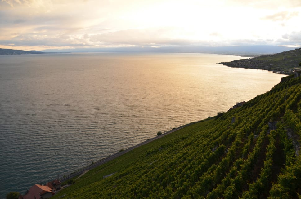 Best time for Grape Harvest and Wine Season in Switzerland