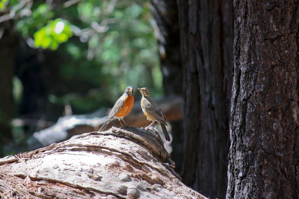 A robin moment