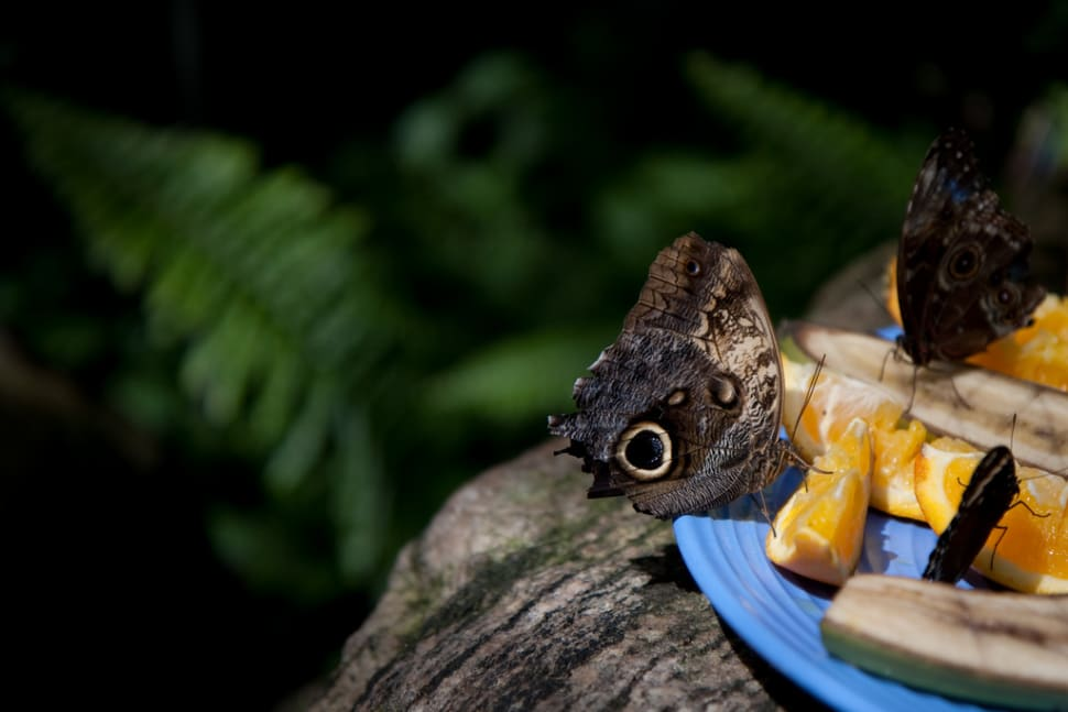 Best time for Butterfly Conservatory in Niagara Falls
