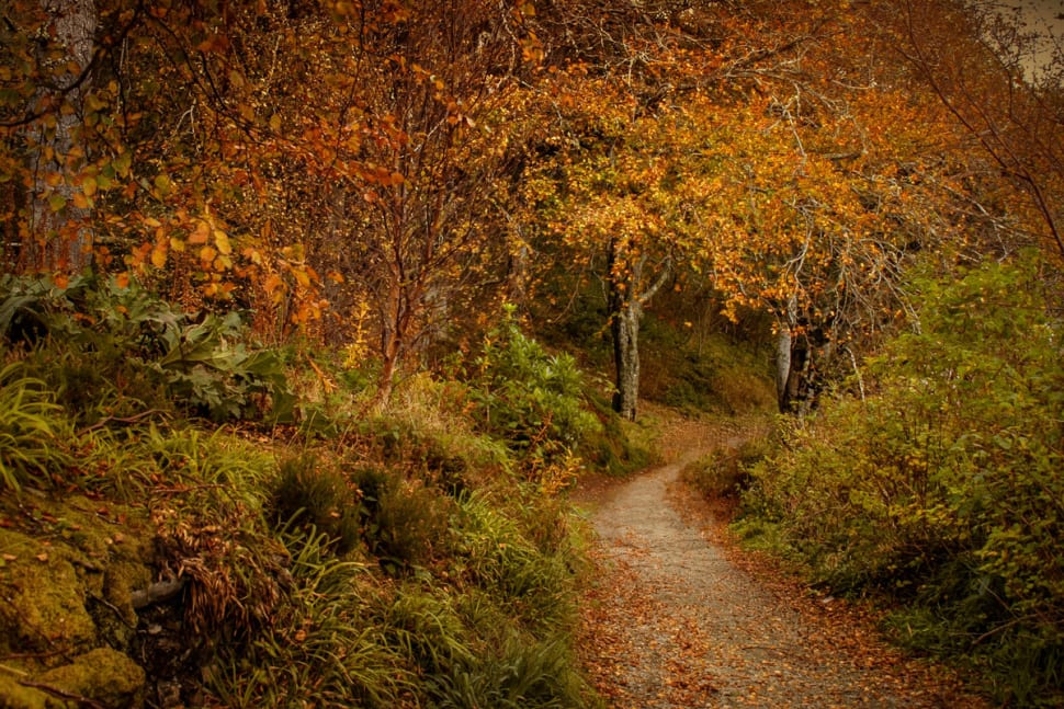 Autumn Foliage in Scotland - Best Season