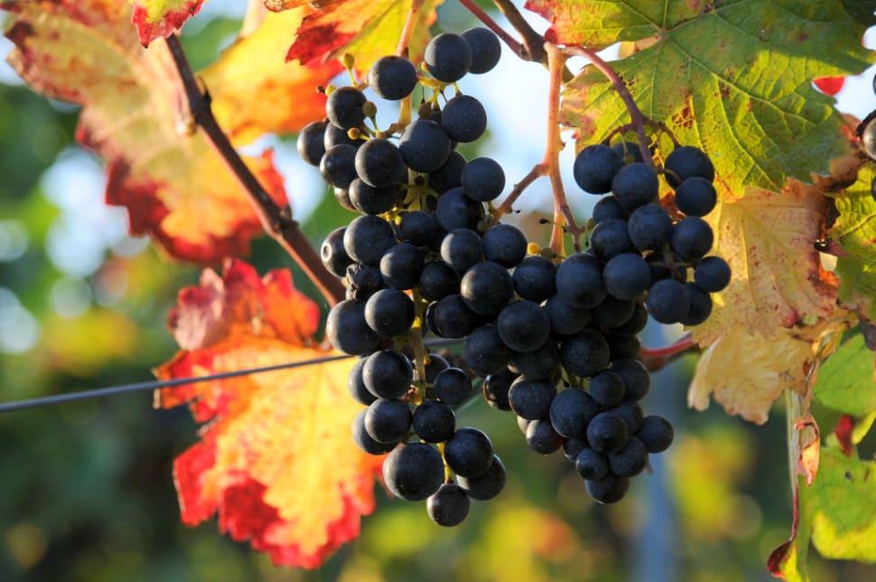 Wine Hiking Day (Weinwandertag) in Vienna - Best Season
