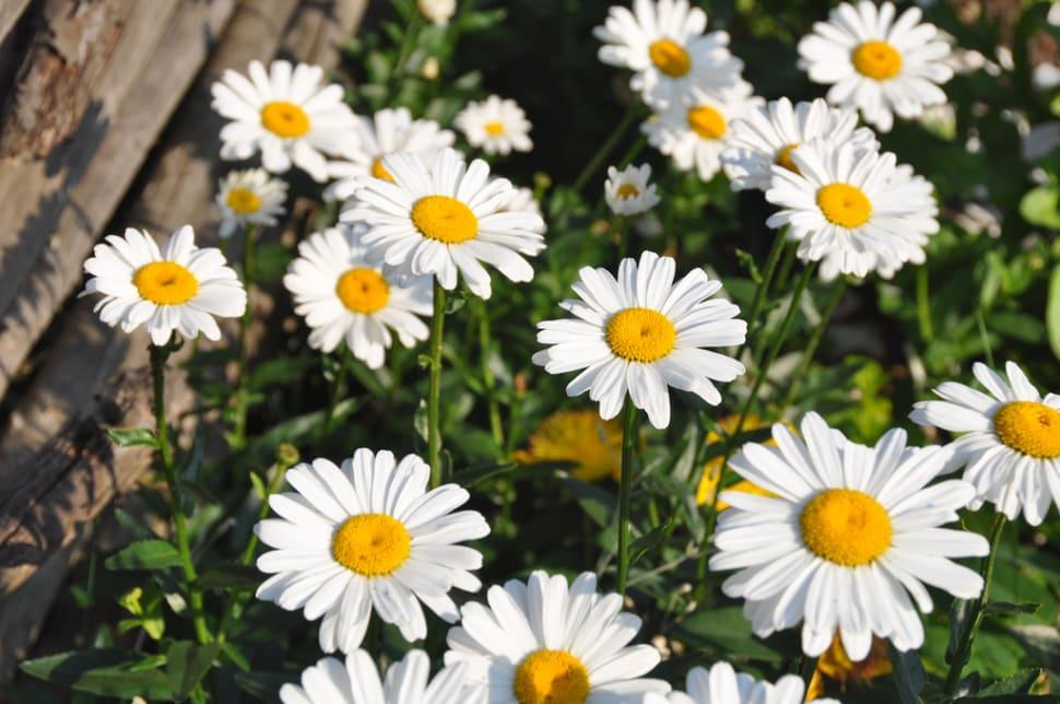 Blooming Fields in Denmark - Best Season