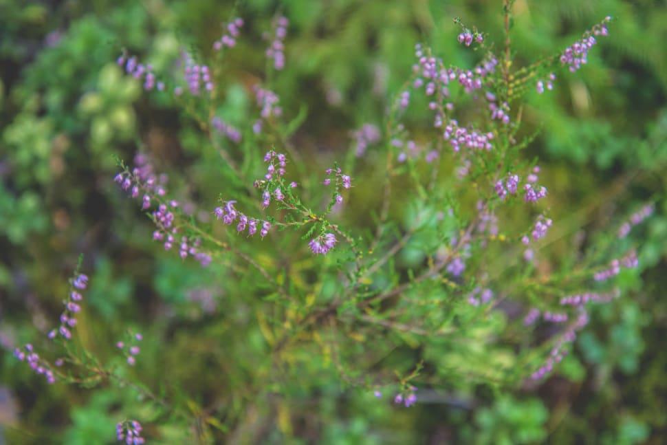 Wildflowers in Estonia - Best Season