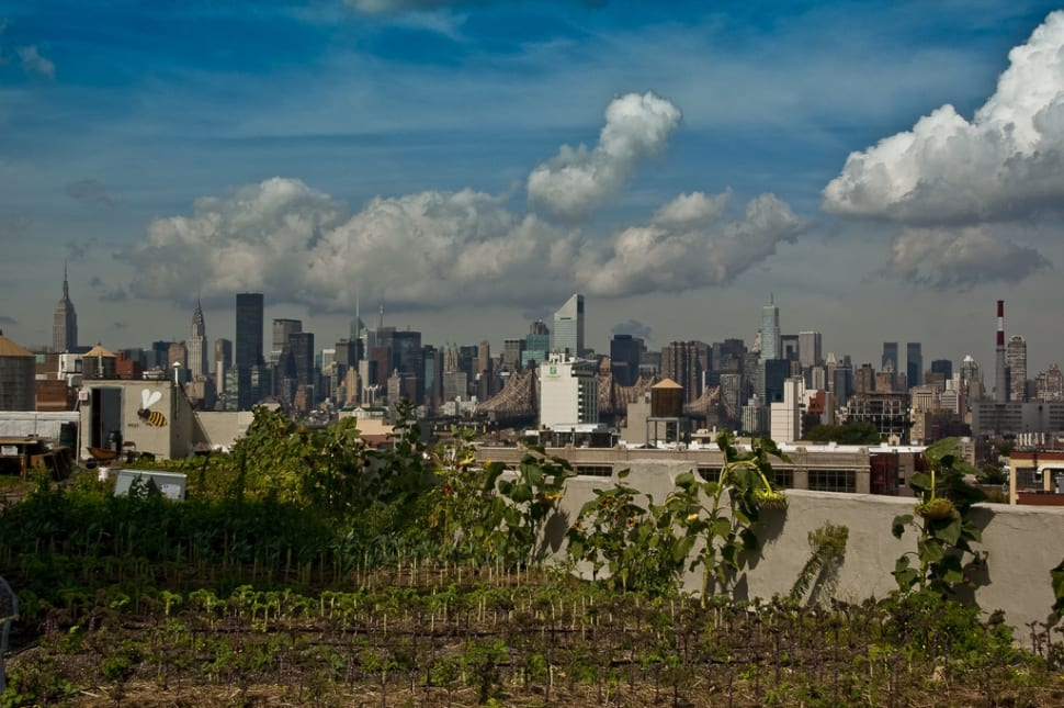 Best time for Rooftop Gardens and Farms in New York
