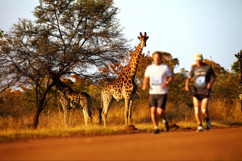 Best time for Big Five Marathon in South Africa