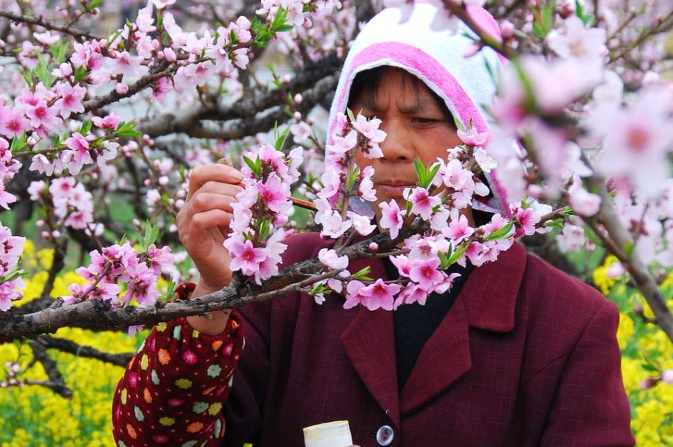 Nanhui Peach Blossom Festival