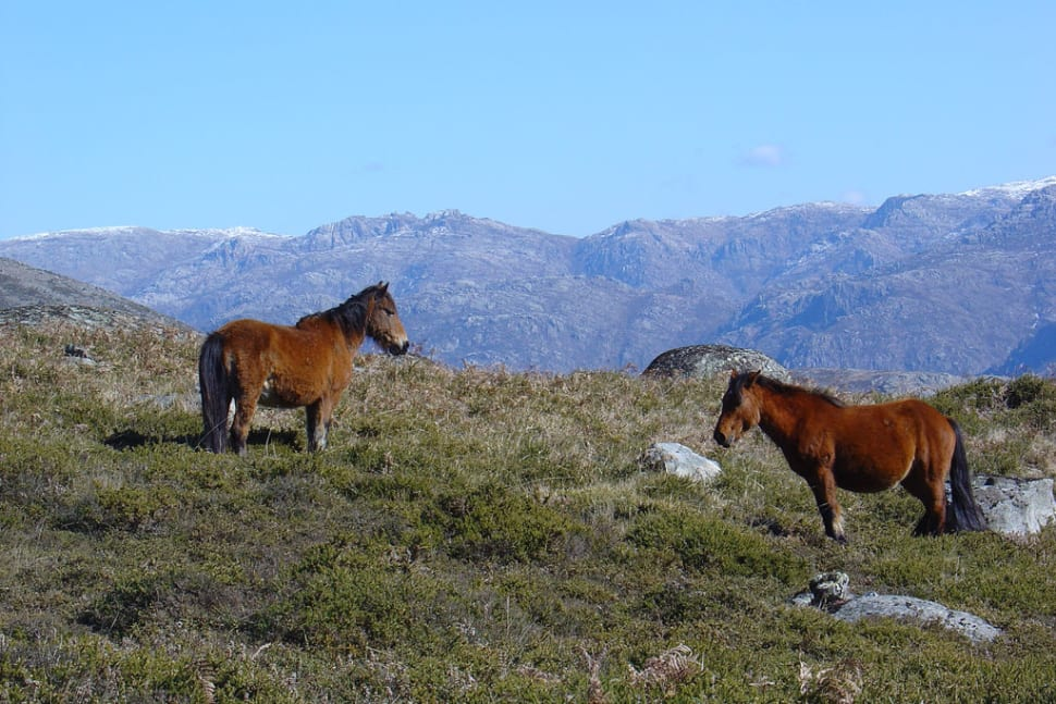 Best time to see Peneda Geres National Park in Portugal