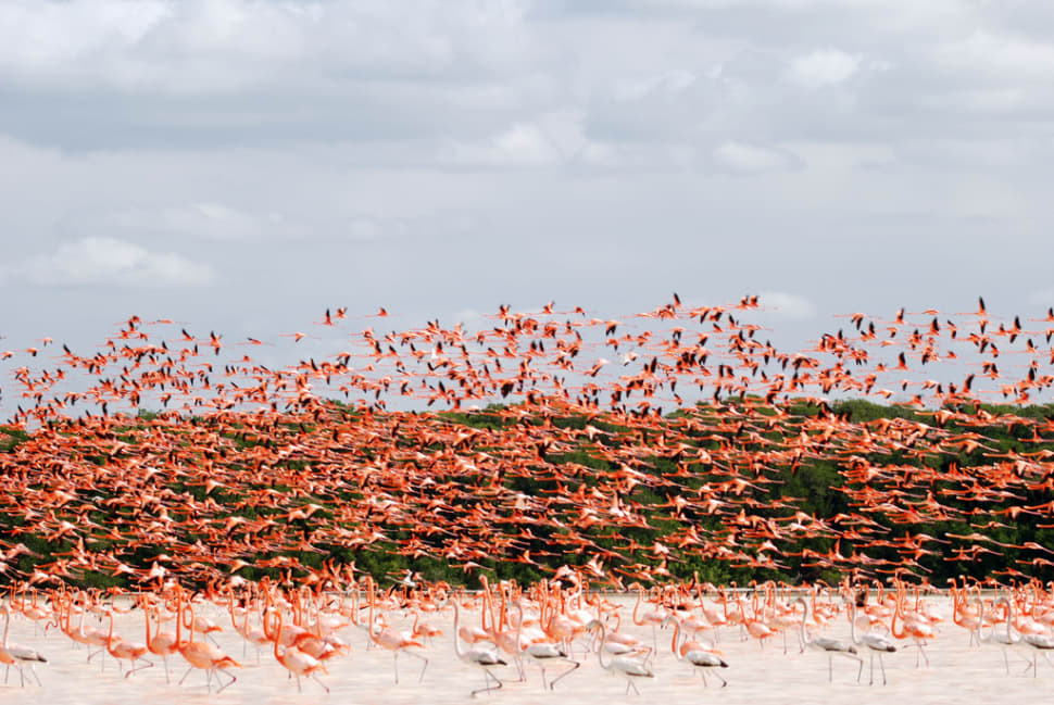 Flamingos in Mexico - Best Season