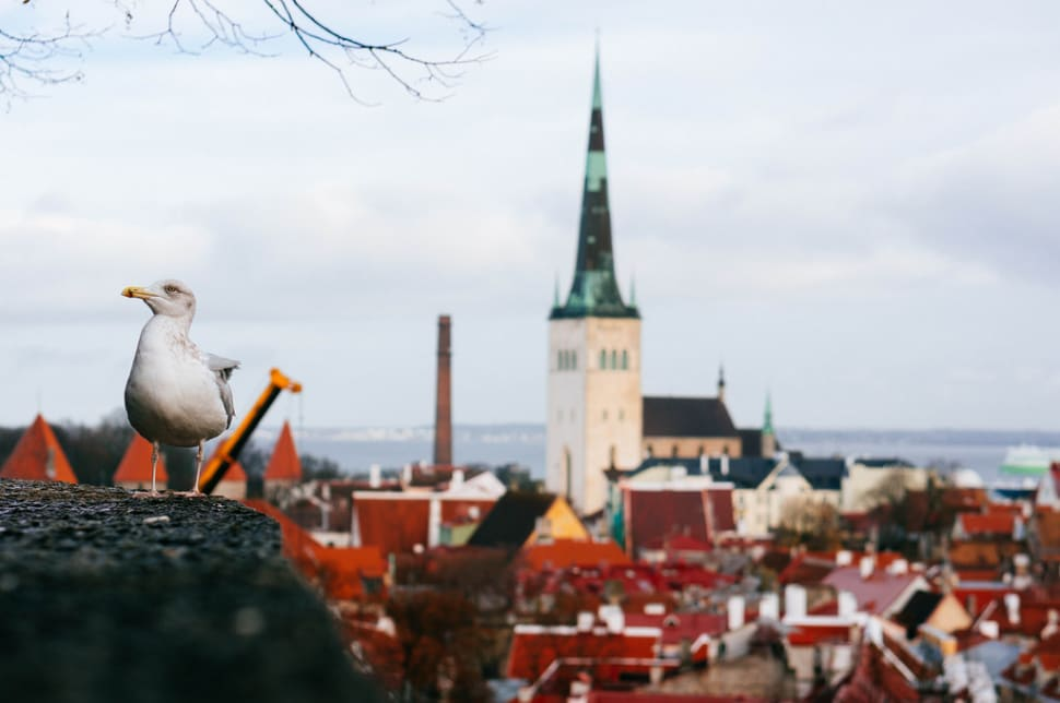 Seagull looking over City. More of a bird watching you than you watching a bird.