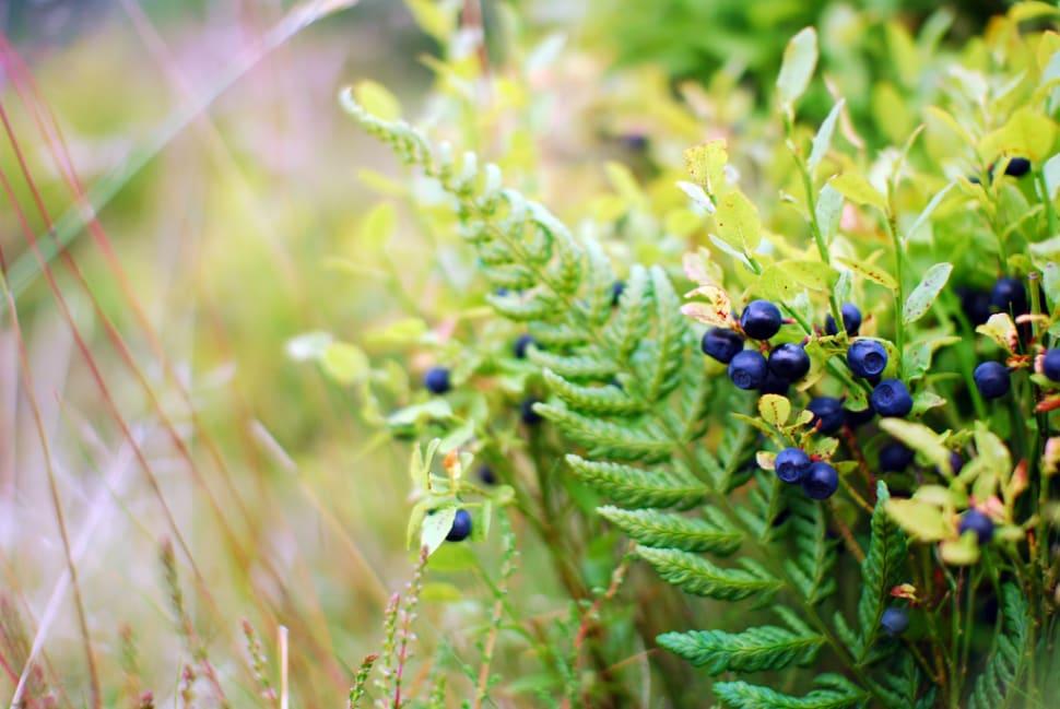 Scotland Berries Season in Edinburgh - Best Time