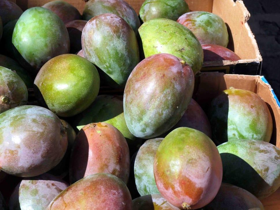 Mango Season in Canary Islands - Best Time
