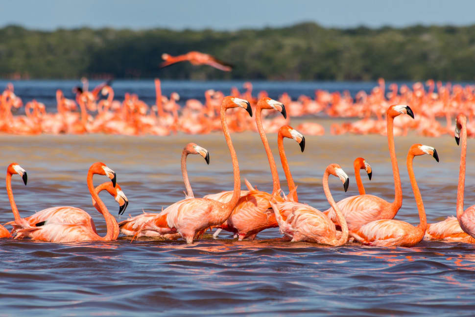 Flamingos in Mexico - Best Time