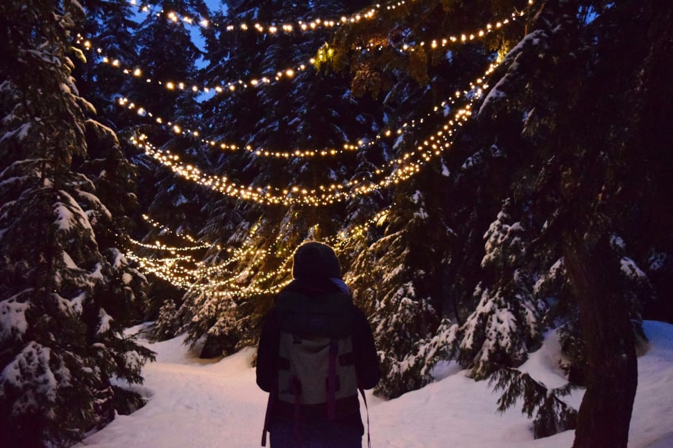Grouse Mountain Light Walk in Vancouver - Best Time