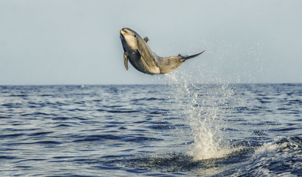 Whale and Dolphin Watching  in Los Angeles - Best Time