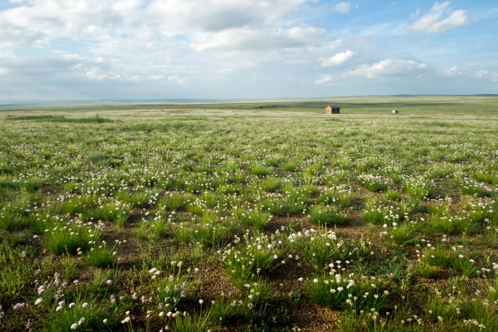 Wildflowers of Steppes in Mongolia - Best Time