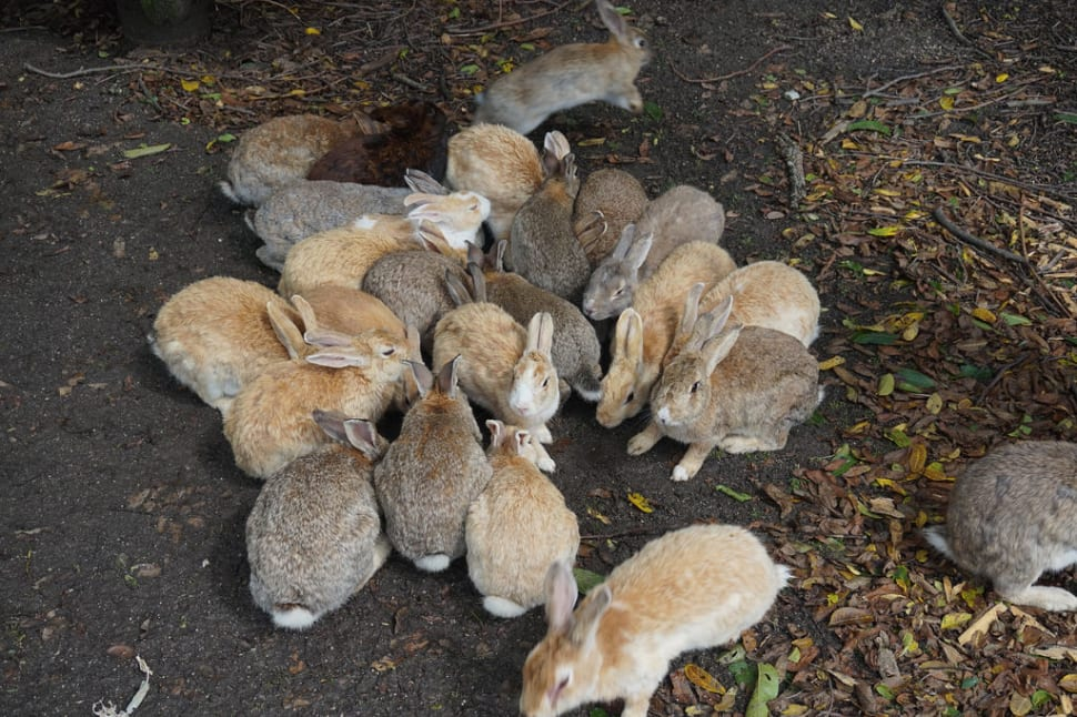 Okunoshima (Rabbit Island) in Japan - Best Time