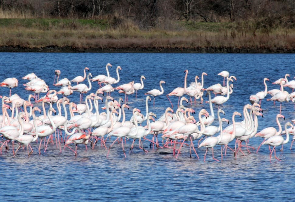 Flamingoes in Ulcinj in Montenegro - Best Time