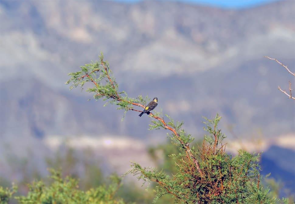 Birdwatching in Corn Creek in Nevada - Best Season