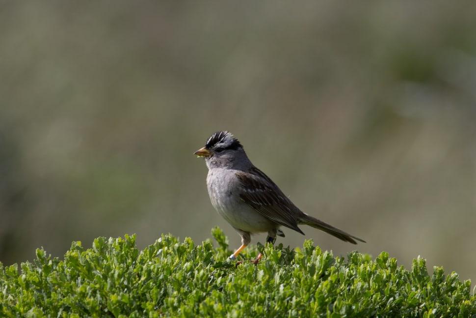 Birdwatching in Abbotts Lagoon