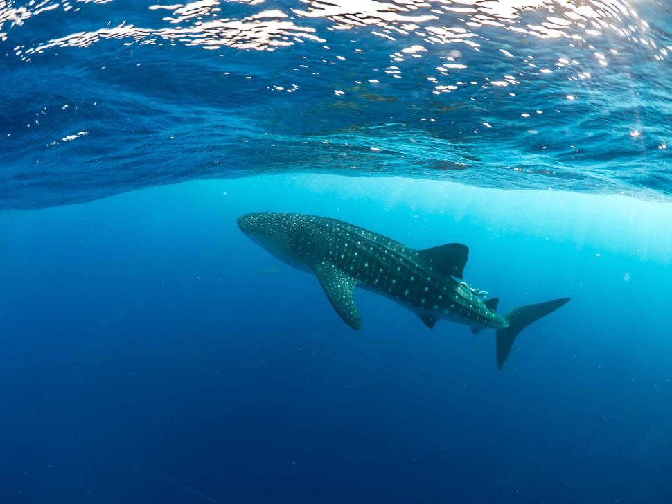Best time for Diving in Honduras