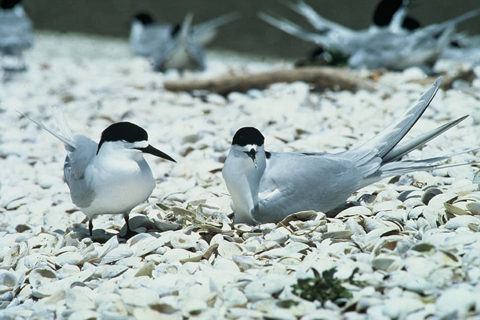 Best time for Birdwatching in New Zealand