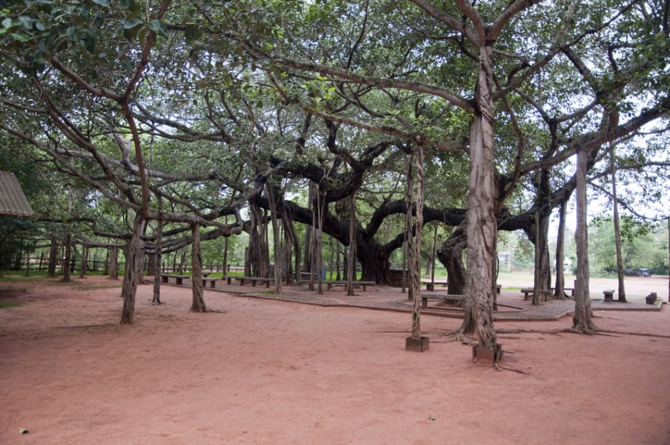 Best time for Auroville in India