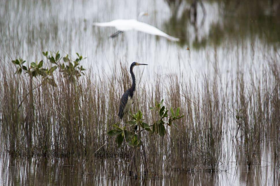 Birdwatching in Miami - Best Time
