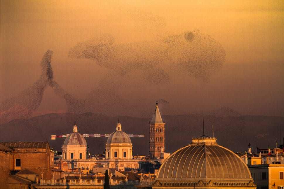 Things to do in Rome : Starling Murmuration