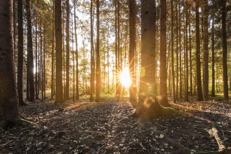 Autumn in Sweden - Best Time